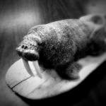 Walrus carving, St Lawrence Island