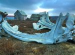 Whale bones from a old hunted animal- Alaska